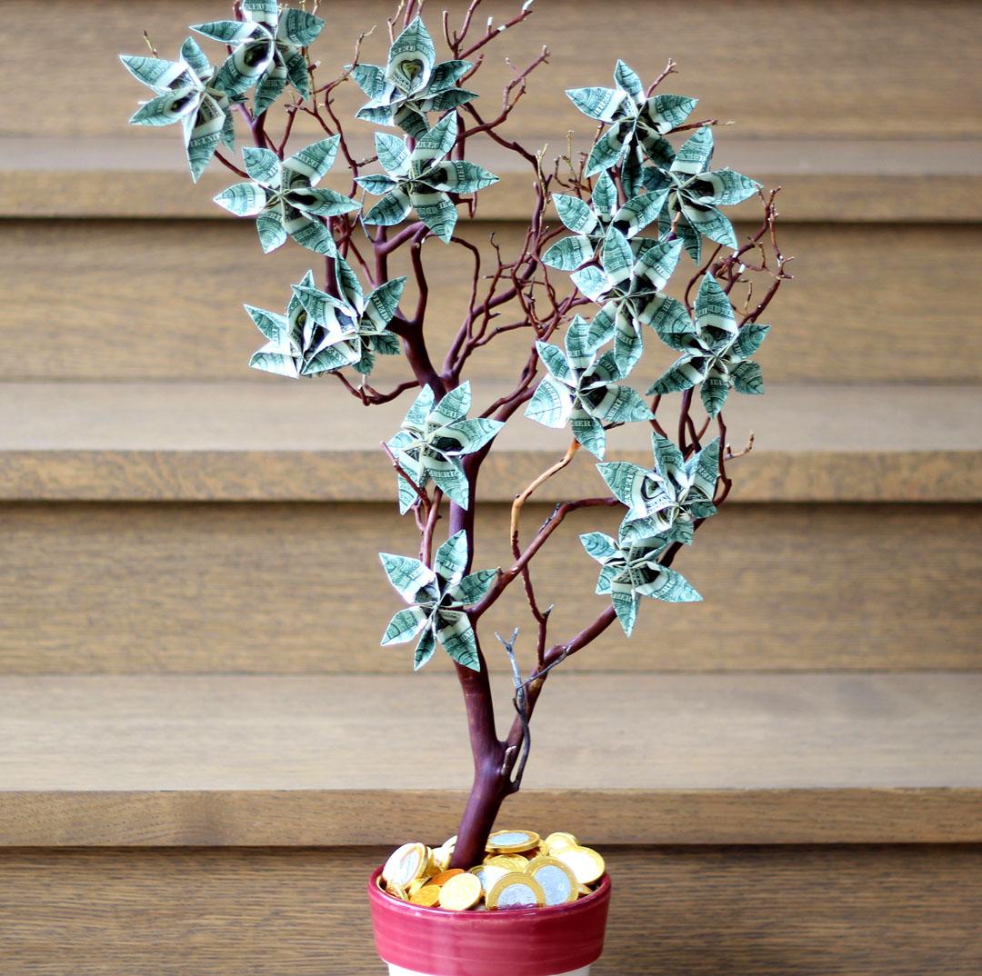 Money Tree (pachira Aquatica)